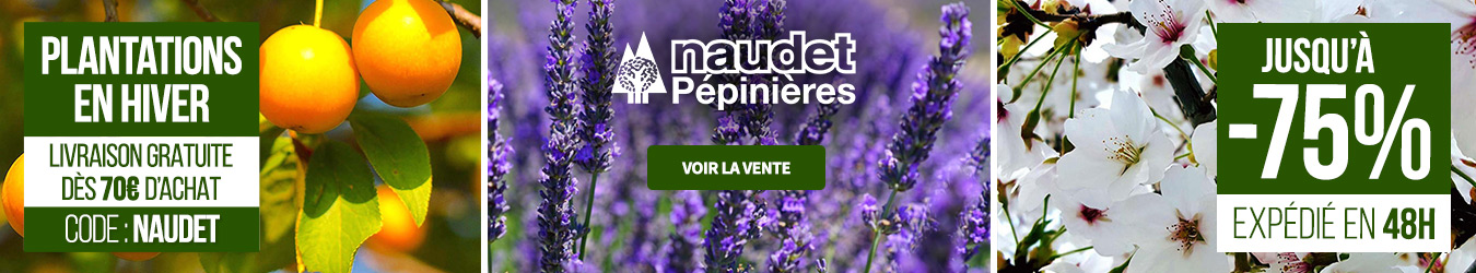 PLANTATIONS HIVER NAUDET