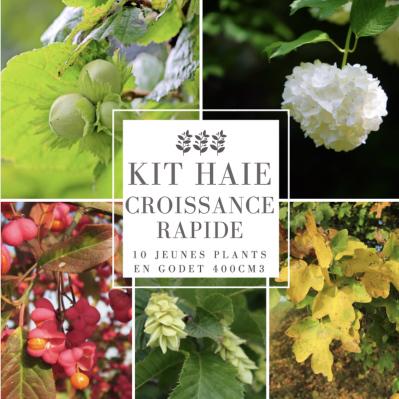 Kit Haie Collection Croissance Rapide - 10 Jeunes Plants